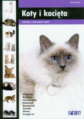 Koty i kocięta Poradnik i kompendium wiedzy